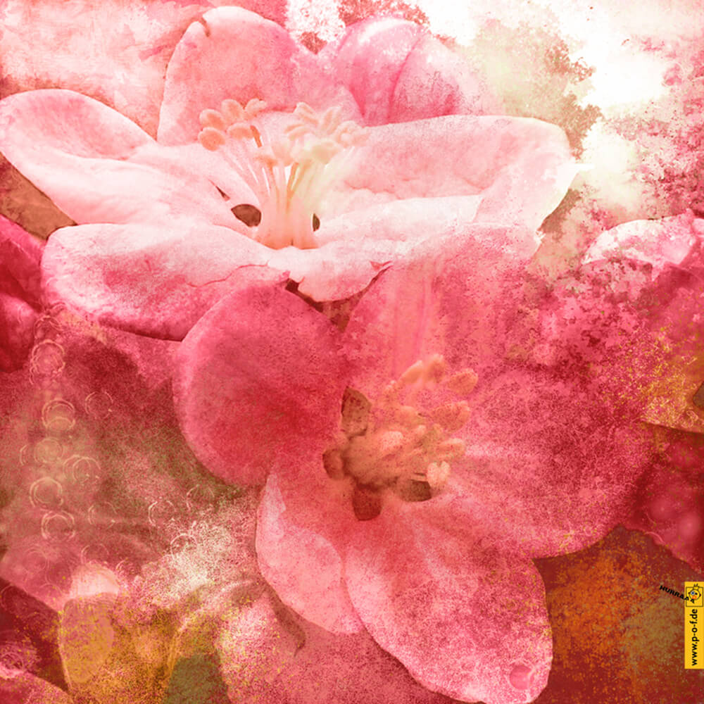 Fotomanipulation für schöne Kirschblüten