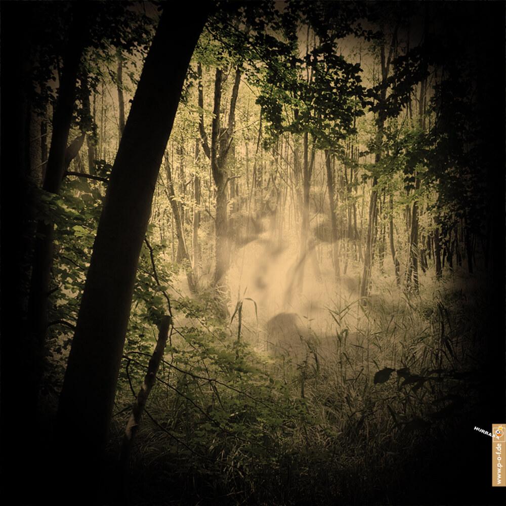 Waldlichtung mit Nebelschwaden