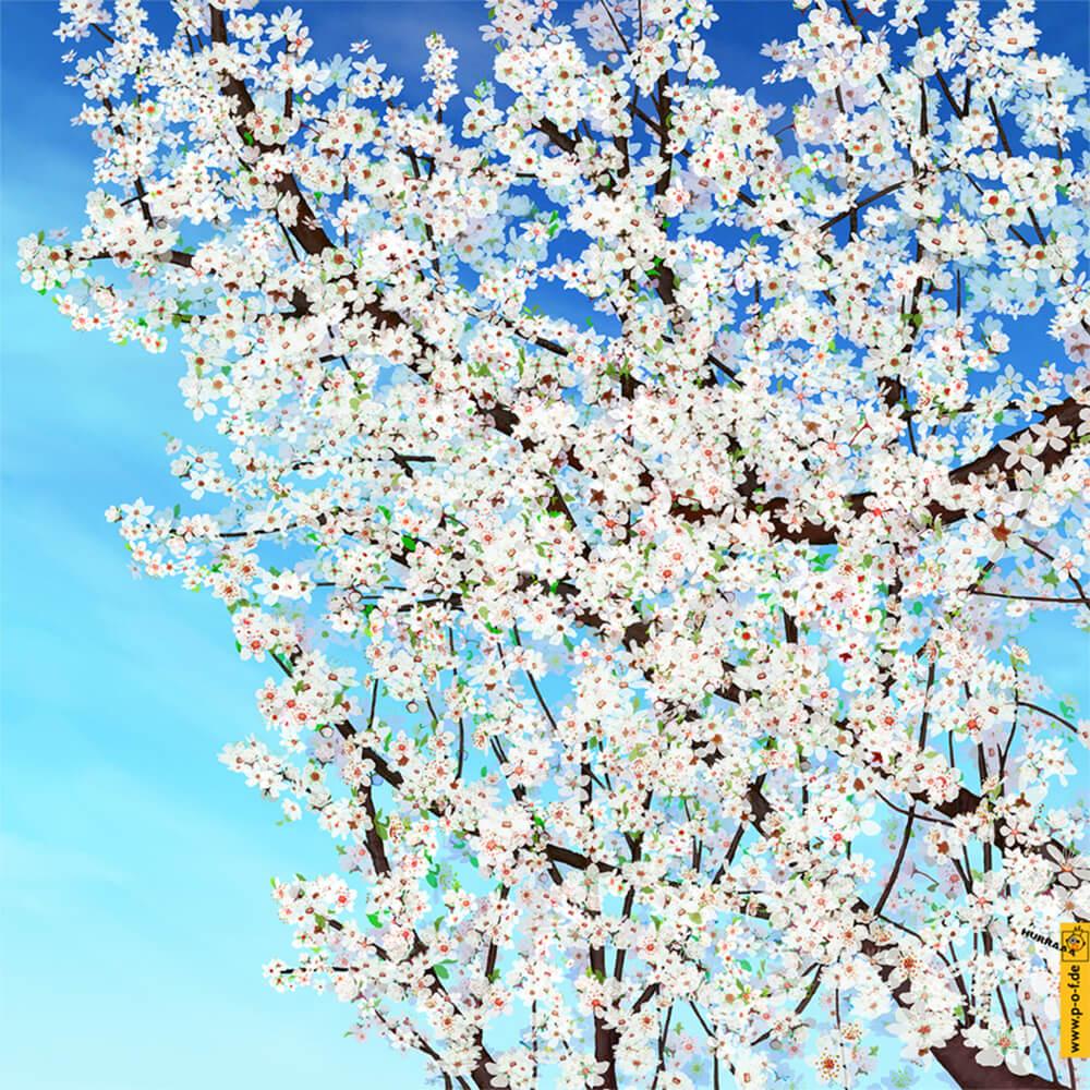 Zweige eines erblühten Kirschbaumes