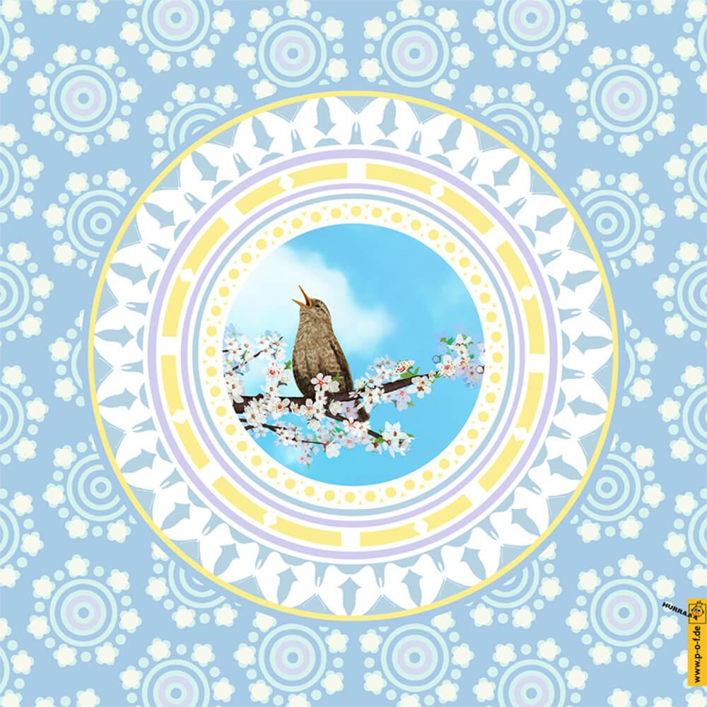 eine Amsel singt ihr Lied auf einem erblühten Kirschzweig