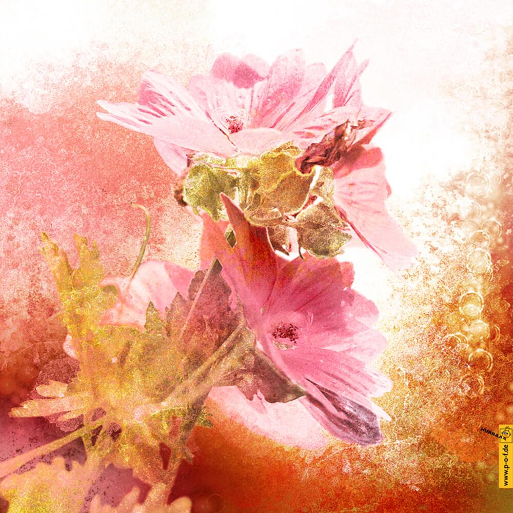 Fotomanipulation für schöne Malven