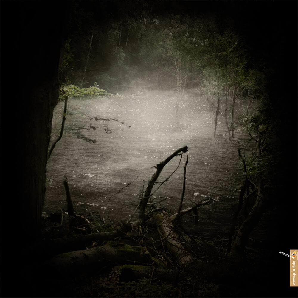 Waldlichtung mit Wasser