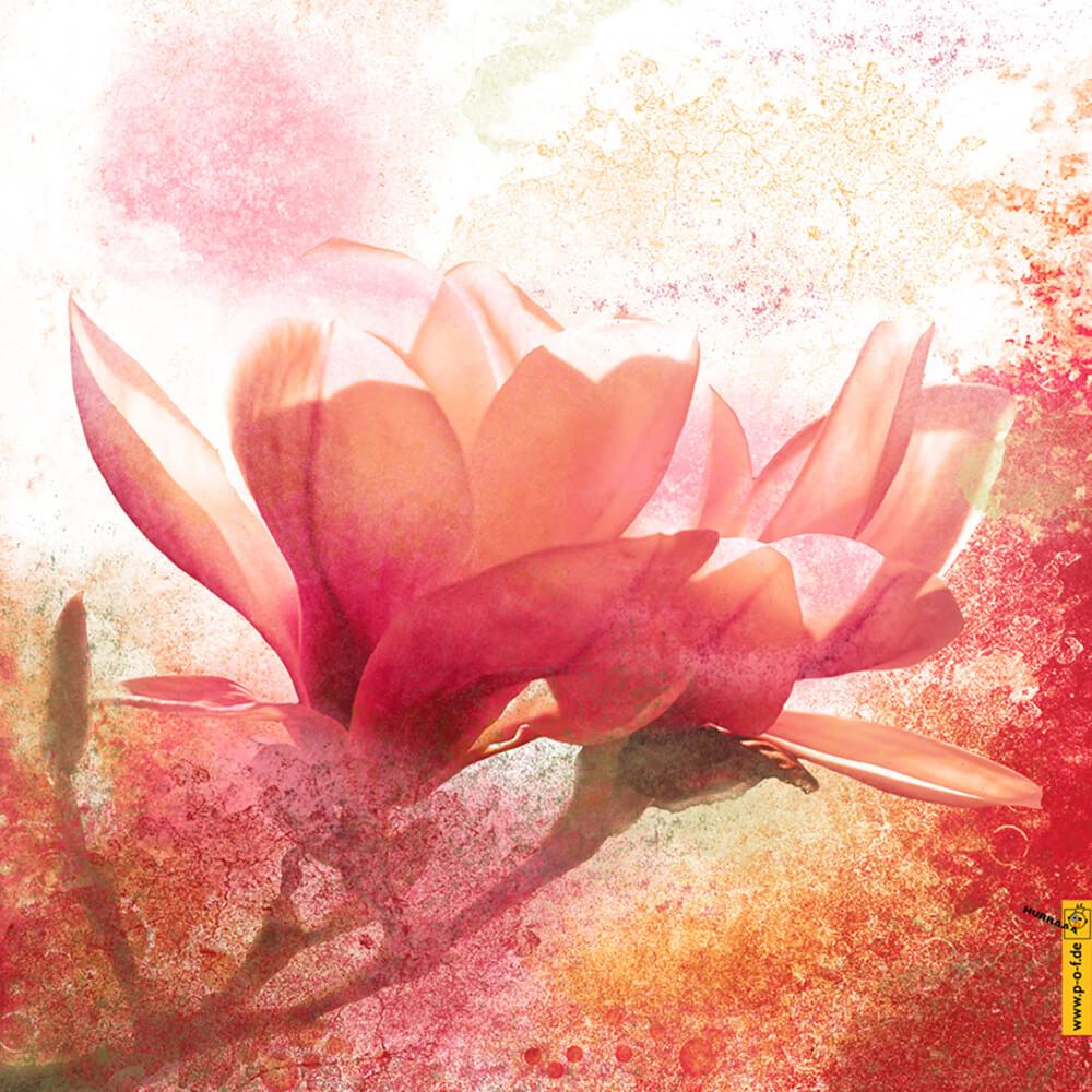 Fotomanipulation für schöne Magnolien