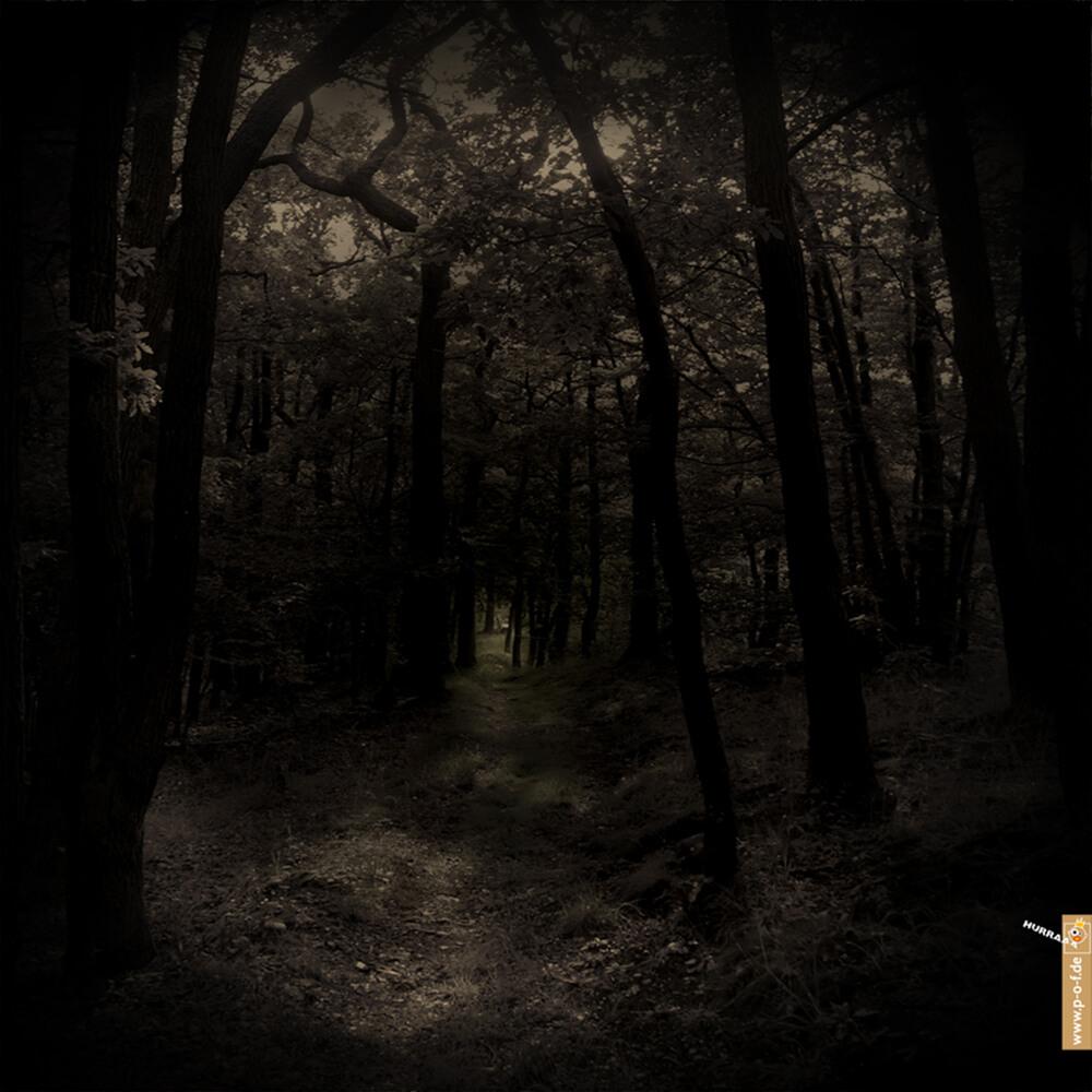 Fotoarbeit dunkler Wald mit Weg zu einer Bank