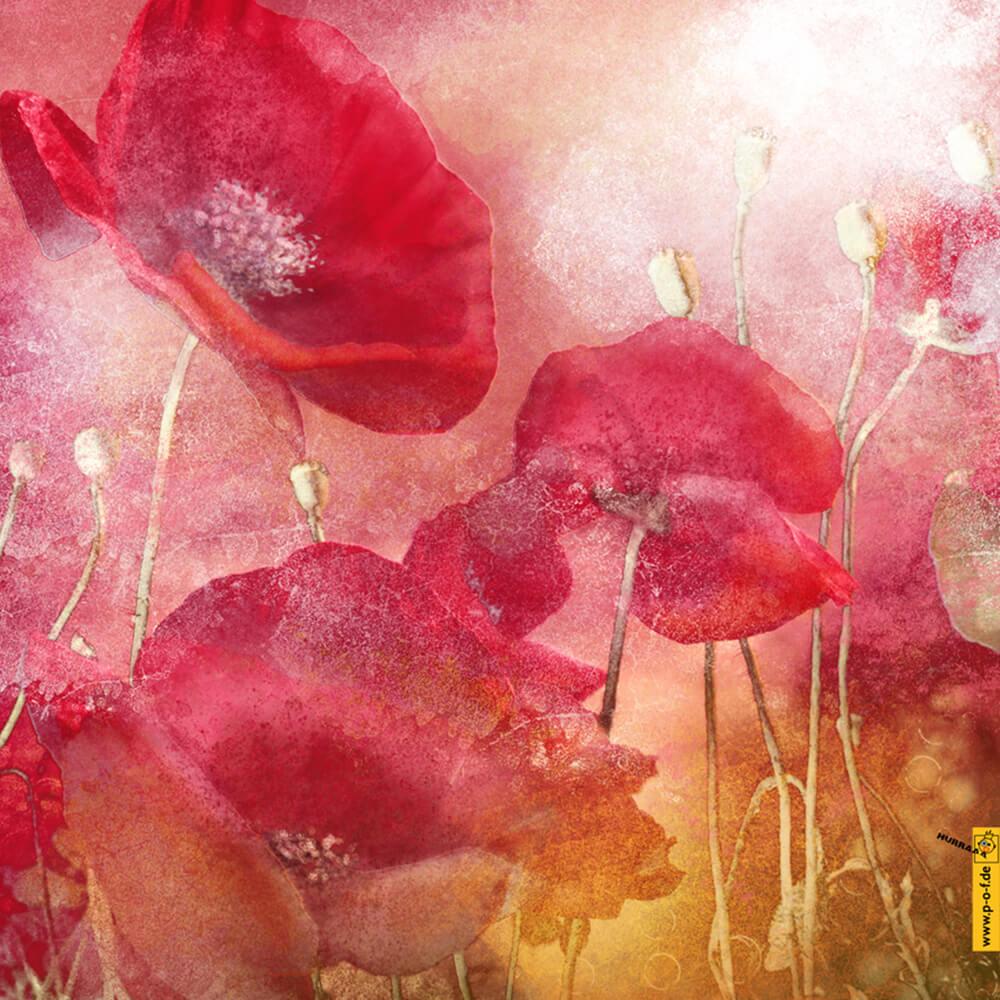 Fotomanipulation für schöne Mohnblüten