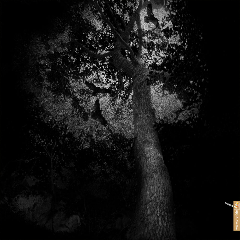 Fotoarbeit Wald mit Raben