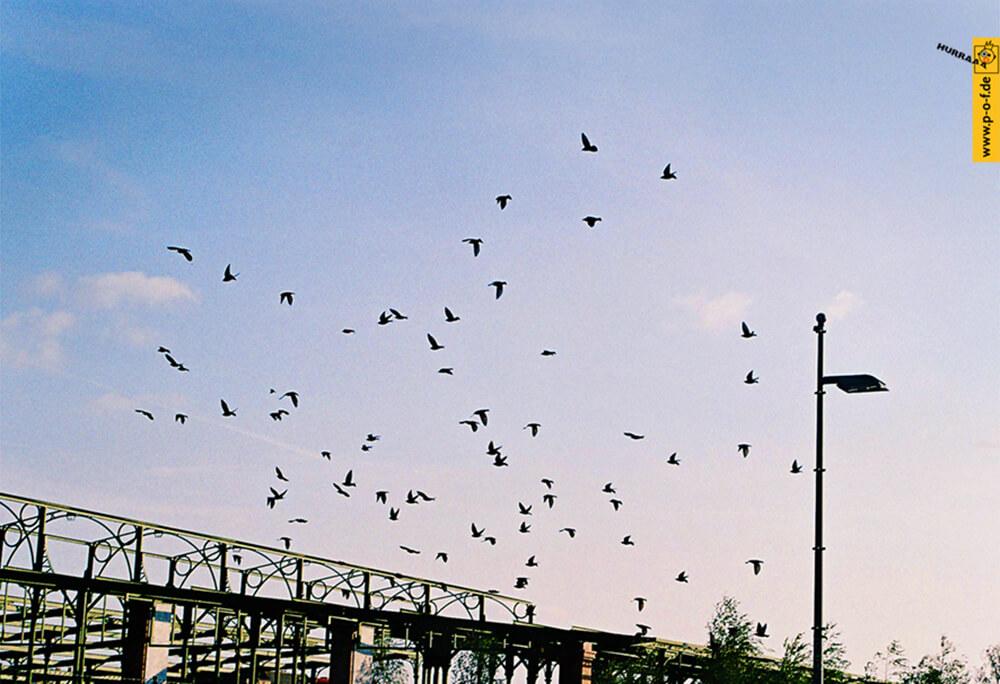 Vogelschwarm übern Blankensteinpark