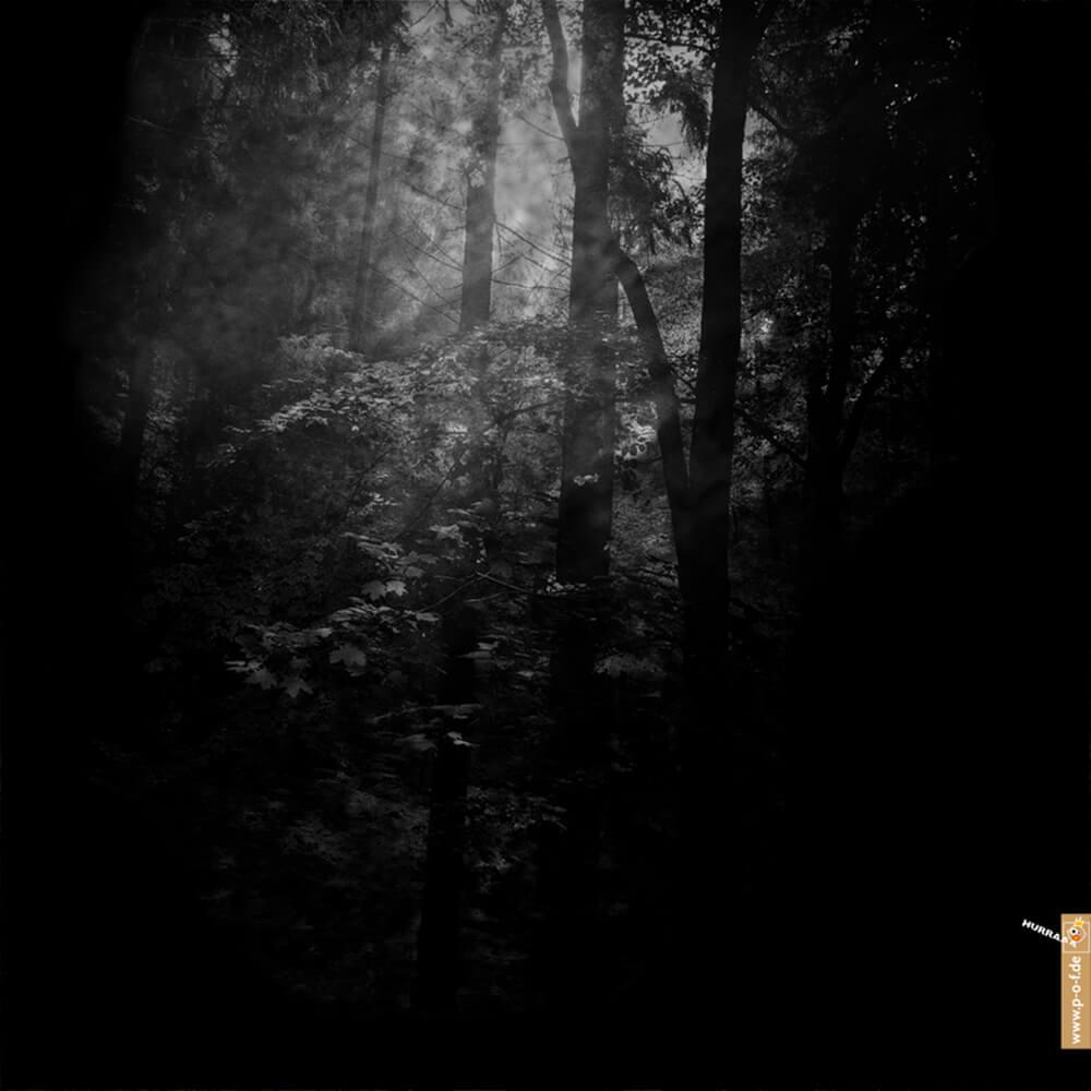 Walddickicht mit durchdringendem Licht